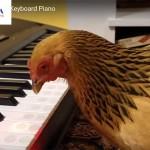 nam-dinh-dau-cung-xem-ga-tro-tai-choi-dan-piano-01