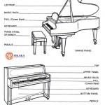 Tiếng Anh chuyên ngành âm nhạc (Phần 2) – Từ vựng các bộ phận đàn piano qua hình ảnh