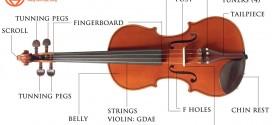 Tiếng Anh chuyên ngành âm nhạc (Phần 5) – Từ vựng các bộ phận đàn violin qua hình ảnh
