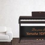 Trong bài viết này, OKAKA sẽ cùng bạn đánh giá đàn piano điện Yamaha YDP-143 cả về kiểu dáng, âm thanh và màn trình diễn. Song song đó cũng sẽ so sánh với các model đàn piano khác trong dòng Arius - cụ thể là Yamaha YDP-103, Yamaha YDP-163 và Yamaha YDP-V240, hy vọng sẽ giúp ích cho bạn ít nhiều trước khi đưa ra quyết định có nên mua cây đàn piano điện này.